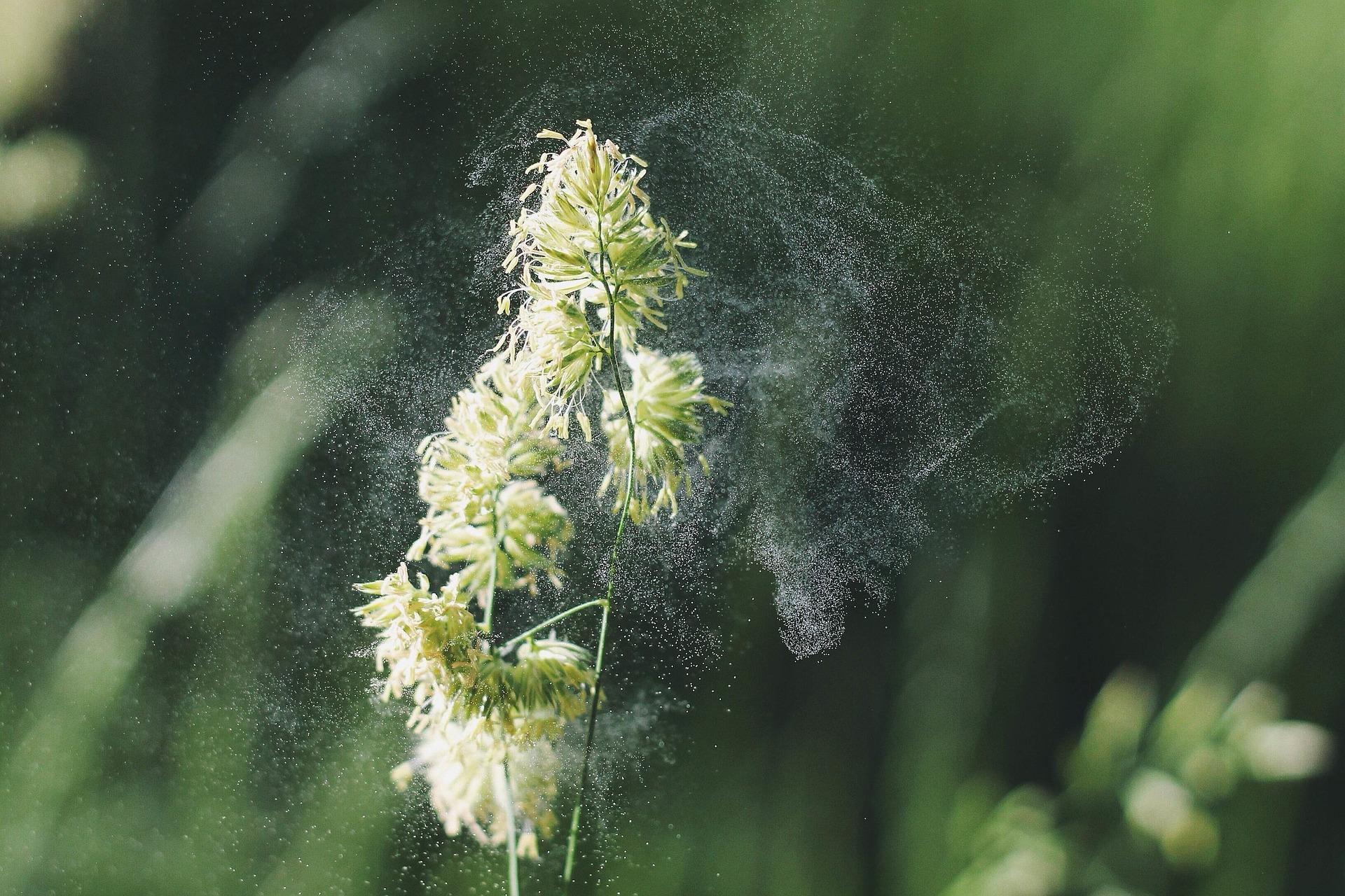 Consejos de limpieza para aliviar la alergia